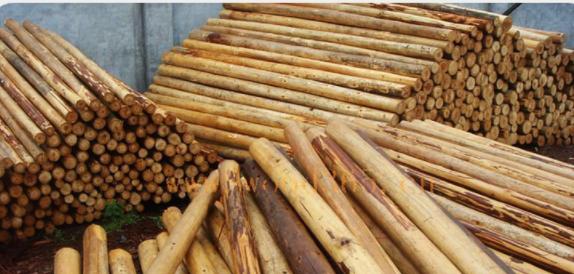 厂家供应 杉木原木 杉木板材 定尺定寸 一手货价批发